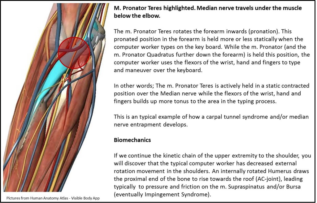 median nerve biomechanics